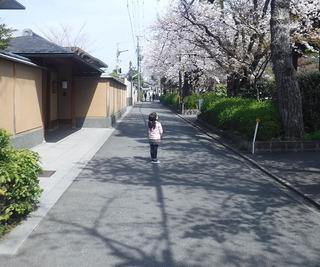 桜見上げて.jpg