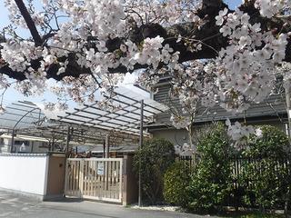 門前桜2021.jpg